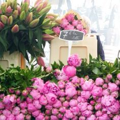 Peonies and French Tulips