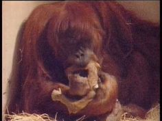 """When we buy these, we lose this.  Palm Oil isn't """"Green"""" or Vegetarian. And it's in 50% of our favorite grocery store."""