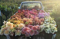 As pessoas estão obcecadas com esta foto de um monte de flores num caminhão