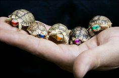 Tiny Teenage Mutant Ninja Turtles / 29 Adorably Tiny Versions Of Normal-Sized Things (via BuzzFeed)