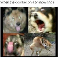 For Dog lovers.Here is collection of some Dank memes dogs that are so funny and make you laugh.Just scroll down and keep enjoy these Dank memes dogs.Read This 26 Dank Memes Dogs Memes Humor, Funny Dog Memes, Funny Animal Memes, Cat Memes, Funny Dogs, Funny Animals, Cute Animals, Animals Dog, Funniest Animals