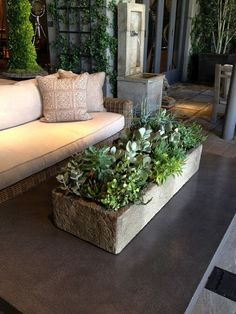 A succulent box like this one is an easy accessory to make a coffee table look well put-together