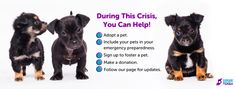 This example from Humane Society of Utah lays it all out in an easy to digest format Marketing Communications, Make A Donation, Emergency Preparedness, Humane Society, The Fosters, Utah, Adoption, Pets, Reading