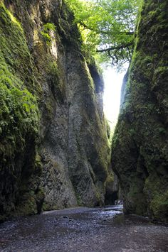 nature walk: oneonta gorge, or Oneonta Gorge, Spring Water, Life Is An Adventure, Walking In Nature, All Over The World, Walks, Lush, Waterfall, Earth
