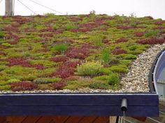 Een vegetatiedak voor vergroten waterbergend vermogen, geleidelijke afvoer van regenwater, verkoelend (werkt tegen de hittestress in steden) en islolerend tegen de kou.