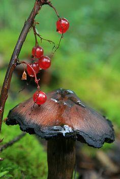 Mushroom -- by Wolfhorn, via Flickr (with highbush cranberries in Alaska)