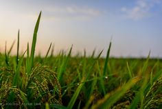 Photograph Dew by Abhinav Asokh on 500px