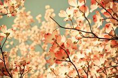Zo mooi. Geweldige kleuren.