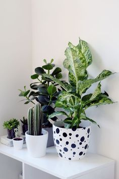I love this little green corner and the variety of plants. Dalmatian Spotted Planter Fall For DIY Indoor Garden, Indoor Plants, Home And Garden, Potted Plants, Lean To Greenhouse, Cactus, Deco Nature, Decoration Plante, Plants Are Friends