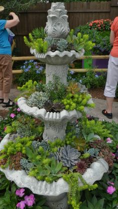 Images of succulent plants in fountain  | Old Antique Fountain filled with Succulent ... | Gardening/Outdoor Id ...