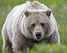 bear4.jpg (3000×2400)