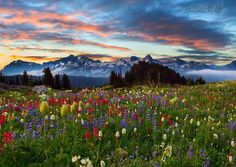 This is an image from the Paradise area on Mount Rainier looking towards the Tatoosh Range.. Thanks for looking .. Enjoy your day ! www.kevinmcnealphotography.com