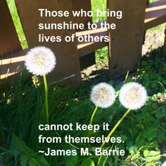 """Those who bring sunshine to the lives of others cannot keep it from themselves."" ~ James M. Barrie #quote #Inspiring"