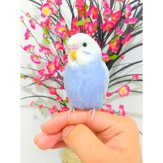 Cute Parakeet