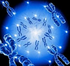 Genetic Profile and Life insurance