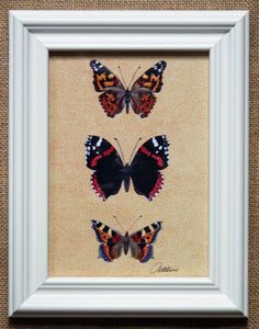 Butterfly Picture Butterfly Print Framed. Pretty cream architrave wooden frame-Painted Lady,Red Admiral & Small Tortoiseshell Butterflies by Canvasbutterfly on Etsy