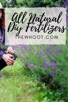 All Natural Fertilizers - Best Homemade Garden Solutions Homemade Plant Fertilizer, Fertilizer For Plants, Garden Fertilizers, Garden Solutions, Home Vegetable Garden, Organic Gardening Tips, Natural Garden, Garden Design, Garden Web
