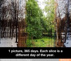 365 days in 1 picture. << I love how this represents the way life is, it may seem like everything is dead and gone, but just when you decide it's over, new life bursts into the picture, bringing a new hope with it :) <<<< dude, that was deep.<<<aha!
