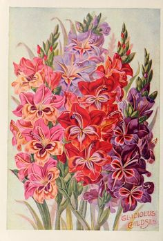 John Lewis Childs Seed Company Catalogue - rare flowers, vegetables & fruits - 1900 - Gladioli