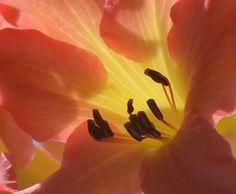 Upclose Botanical Gardens, Shots, Nature, Flowers, Beautiful, Naturaleza, Nature Illustration, Royal Icing Flowers, Off Grid