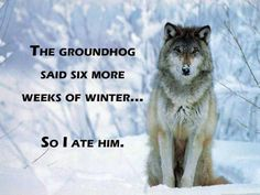 I love wolves.no wonder I always get the wolf as my spirit animal. Beautiful Wolves, Animals Beautiful, Lone Wolf Quotes, Wolf Qoutes, Of Wolf And Man, Happy Groundhog Day, Wolf Stuff, Wolf Spirit Animal, Wolf Love