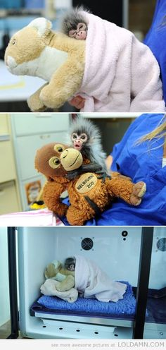 Baby monkey who was rejected by his mother, is comforted by toys. - Funny pictures and Awesome Quotes.