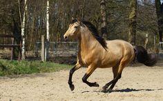 Beautiful-Andalusian-Horse-Wallpaper.jpg (1920×1200)