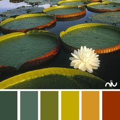 color palette - lotus