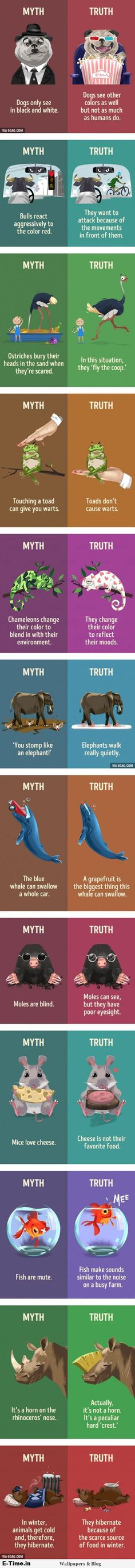 12 Myths And Truths About Animals