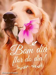 Positive Mind, Love Pet, Cute Images, Spanish Quotes, Cute Gif, Good Morning Quotes, Pet Shop, Happy Day, Dog Cat