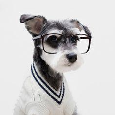 5 stylish dogs inspiring the best menswear trends this season.