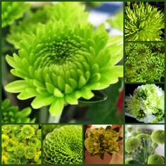Green flowers to use in your bouquet #GreenAster
