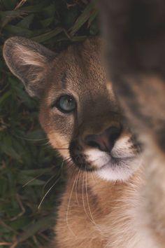 Hello there – animal wallpaper Cute Little Animals, Cute Funny Animals, Cute Cats, Big Cats, Cute Creatures, Beautiful Creatures, Animals Beautiful, Tier Fotos, Animal Wallpaper