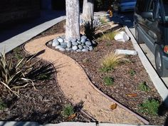 drought tolerant plants california   jpg