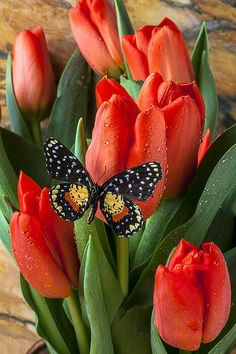 Flores y mariposa, bonita combinación