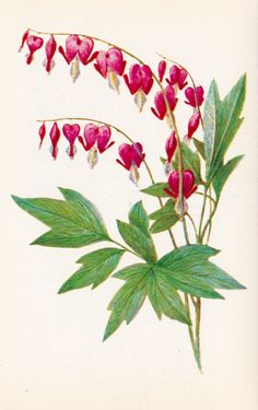 Choose a portion of this for a shoulder tattoo vintage 2 flowers series ditsentra by russiansoulvintage Bleeding Heart Tattoo, Bleeding Heart Flower, Bleeding Hearts, Illustration Botanique, Illustration Blume, Botanical Flowers, Botanical Prints, Art Floral, Heart Flower Tattoo