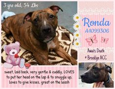 Safe ❣ At great risk of being killed !!!   My name is RONDA. My Animal ID # is A1099306. I am a female br brindle and white am pit bull ter mix. The shelter thinks I am about 3 YEARS old.  I came in the shelter as a STRAY on 12/10/2016 from NY 11208, owner surrender reason stated was STRAY. I came in with Group/Litter #K16-084019.