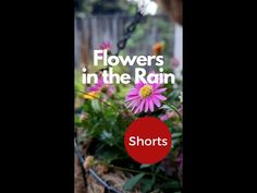 Flowers in the Rain | Pollinator Friendly Garden | #Shorts​ - YouTube Native Plants, Rainy Days, Plant Based, Shorts, Garden, Artwork, Youtube, Flowers, Garten