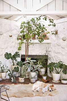 Surrounded by the wilds of Topanga Canyon, General Store founder Serena Mitnik-Miller transforms a former hunting cabin into a peaceful family retreat. Interior Modern, Home Interior, Interior Design, Hanging Plants, Indoor Plants, Potted Plants, Tons Clairs, Rue Verte, Topanga Canyon