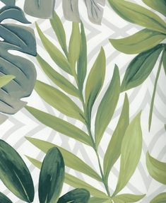 Large tropical palm leaves in rich shades of green contrast beautifully against a fresh white background with a subtle geometric pattern. A wallpaper to add a fun and quirky twist to your home! Plant Wallpaper, Butterfly Wallpaper, Leaves Wallpaper, Green Backgrounds, Wallpaper Backgrounds, Wallpaper Minimalista, Wallpaper Powerpoint, Minimalist Wallpaper, Botanical Wall Art