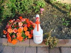 Organic Weed Killer Ingredients: .4 cups white vinegar  1/4 cup salt  2 teaspoons dish detergent  Directions: Mix ingredients together and spray on the weeds- Ho Ho goodbye weeds.