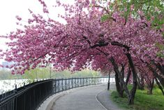 Cherry Blossoms...So beautiful and a welcome sign that warmer weather is on the way!