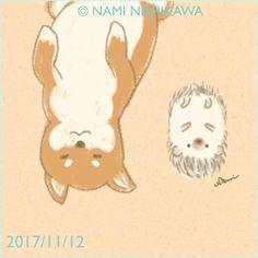1330 すぐ仰向けになっちゃう柴犬 Shiba Inu