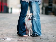 dogs need engagement sessions too