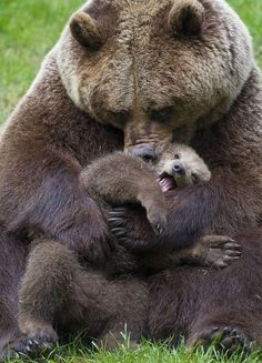 """southernsideofme:"""" Mom please stop, the other cubs are watching!"""""""