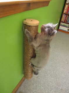 "28"" Wall Mount Vertical Scratching Post by MountainCatTrees  $66"