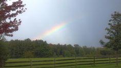 A Rainbow in Full Bloom!