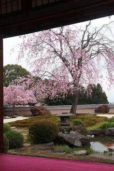 Garden of Shobo-ji temple kyoto japan