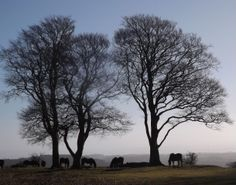 """See 4 photos and 1 tip from 10 visitors to Seven Sisters Quantock Hills. """"Wild ponies at the top of the hill if you're lucky"""" Promised Land, Lost Soul, Somerset, Wicca, Summer Days, Countryside, Sisters, Sunset, Landscape"""
