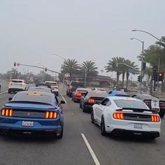 Ford Mustang family
